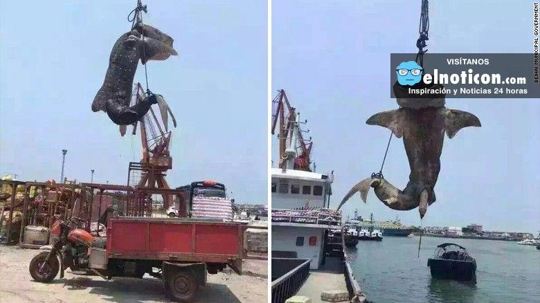 Pescan tiburón ballena