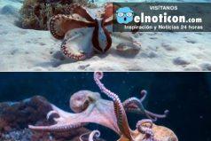 ¿Sabes cuántas especies de pulpo hay en el océano?