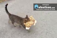 Este gato se va de visita a donde el vecino y ¡se lleva su peluche!