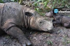 Very Rare Rhino Just Gave Birth To A Baby Girl