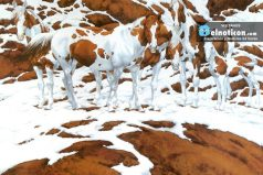 How many horses do you see in this gorgeous snow scene?