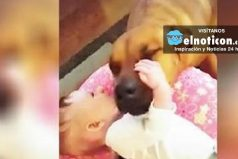 Dog Who Was Born In A Shelter Can't Stop Kissing His New Baby
