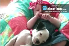 Little girl and pit bull have loved each other every day since they were born