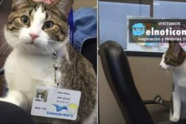 Meet Meow Meow, the newest member of the Canadian North team