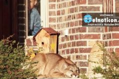 Family Almost Trips Over Mountain Lion On Their Doorstep