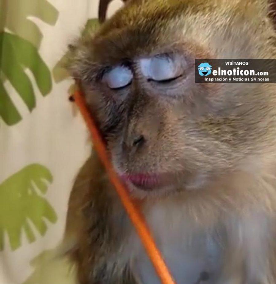 Monkey Loves Being Groomed