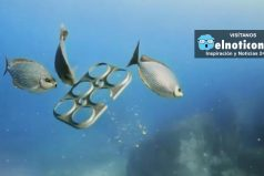 These edible six-pack holders can be eaten by marine life