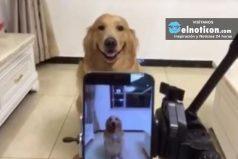 Dog Actually Smiles For Photo