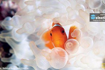 Encontramos a Nemo