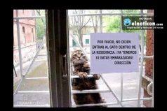 Por favor no dejen entrar al gato…