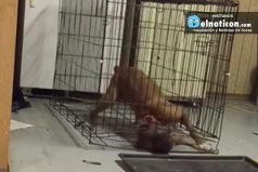 Genius Dog Escapes Cage