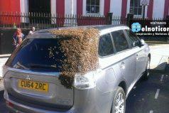 Enjambre de abejas persigue un auto por dos días para rescatar a su reina