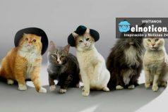 SHINyan, la banda de música conformada por gatos y que revoluciona el mundo ¡Son encantadores!