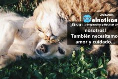 Por fin los animales de la calle serán protegidos en Bogotá ¡Qué buena noticia!
