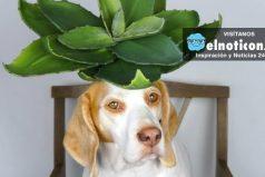 Él es Maymo, el perro más famoso de YouTube… Esta vez posa con plantas y flores en la cabeza