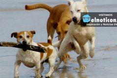 México tendrá por primera vez una playa amigable para las mascotas