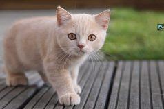 El gato ahorrador ¡un amigo que te traerá infinita felicidad!