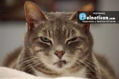 10 cosas que tu gato odia de ti