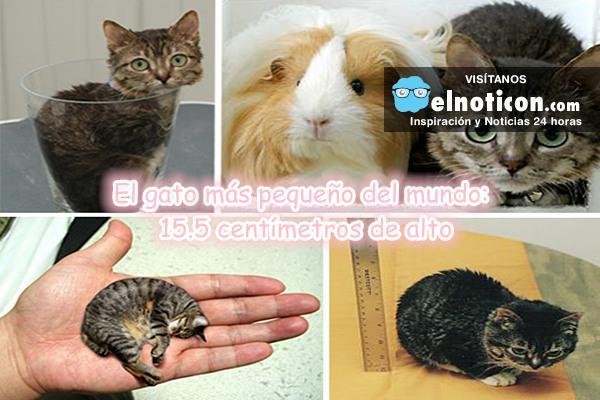 La vida del gato más pequeño