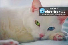 10 Razas de gatos que quizás nunca verás ¡Muy extraños!
