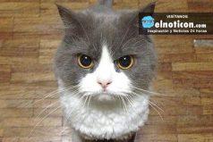 Conoce los gatos más valientes del mundo ¡Son unos héroes!