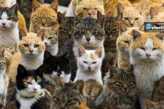 Conoce el lugar donde habitan más gatos que seres humanos ¡Quedarás enamorado!
