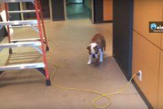 ¿Tienes problemas? ¡Este perrito te enseñará a enfrentarlos!