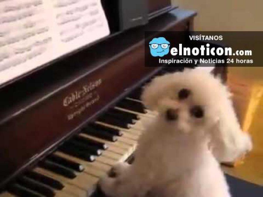 Mira el hermoso perro que canta y toca el piano ¡Toda una estrella!