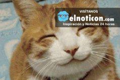 10 trucos para hacer feliz a tu gato ¡Quedará enamorado!