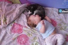 Este gato podría ser mejor niñero que tú ¡Es una belleza!