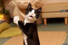 Este gatico se cree un perro, mira como se comporta ¡DIVINO!
