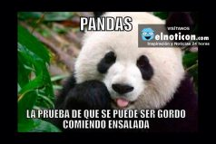 Pandas…