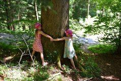 Después de leer esto abrazarás todos los árboles que veas