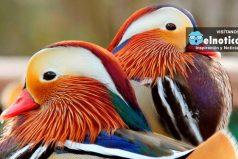 10 Animales con los colores más extraños del mundo ¡Te van a encantar!