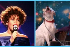 La perrita que canta a su modo la versión de 'I will always love you' de Whitney Houston