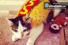 Estos gaticos tan disfrazados son irreconocibles ¡Qué adorables se ven!