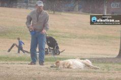 Mira cómo este perro se hace el muerto para que no se lo lleven del parque