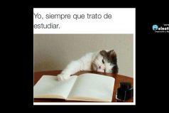 Yo, siempre que trato de estudiar…