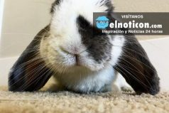 Conoce al tierno conejo artista cuyas pinturas se venden por Internet