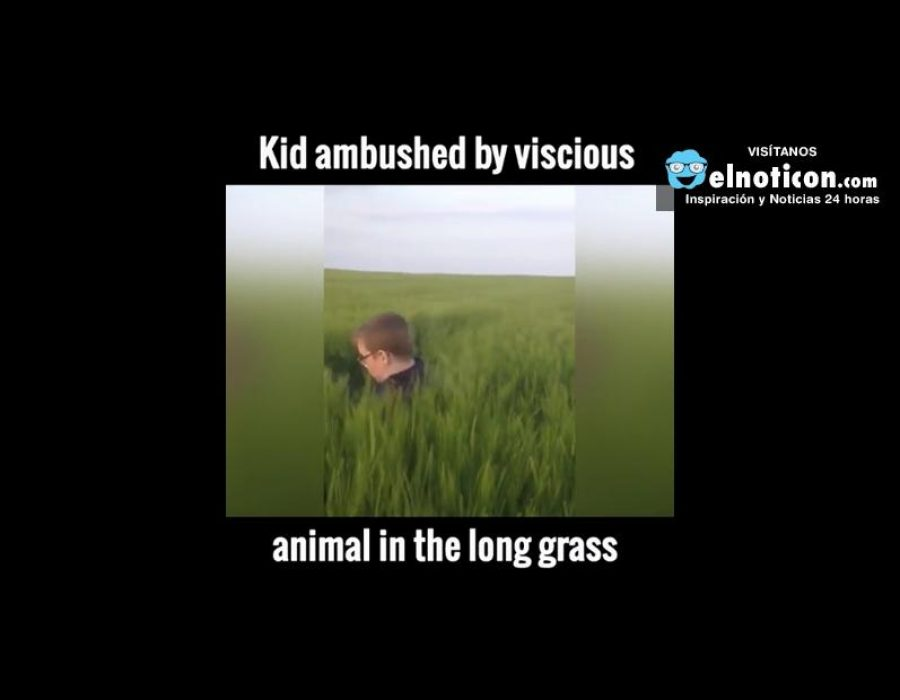 Stay Out of The Long Grass!