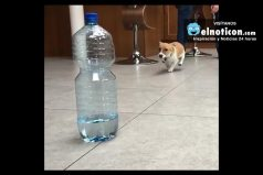 Dog Vs Water Bottle
