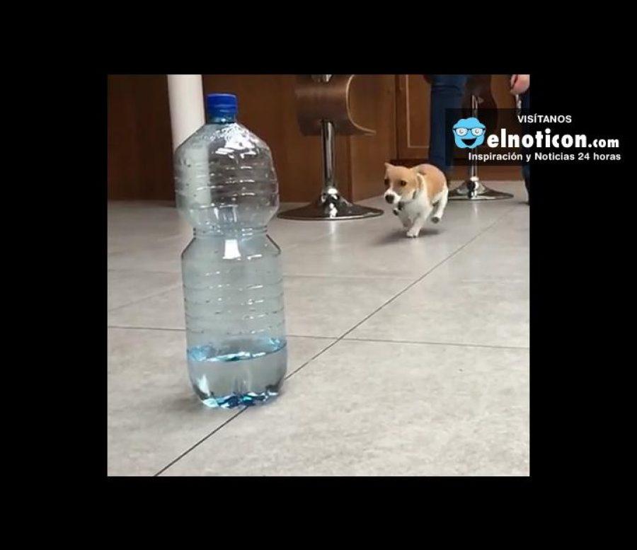 Dog Vs Water Bottle