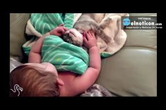 Baby Can't Stop Petting Her First Kitten