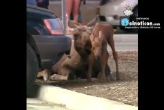 Moose Born in Parking Lot