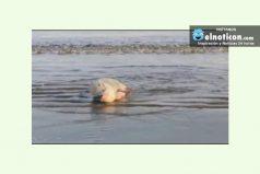 Nada como un refrescante baño en el mar