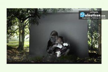 Koko, el gorila que habla con los humanos
