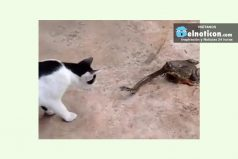 Un gato peleando con una serpiente que a su vez esta siendo devorada por un SAPO