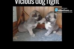 Vicious Dog Fight
