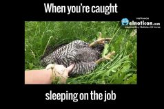 When you're caught sleeping on the job