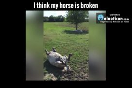 Pinto The Horse Plays Dead